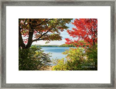 Autumn Lake Framed Print by Elena Elisseeva