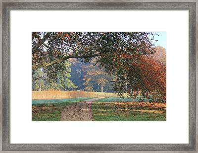 Autumn Landscape With Colored Trees In Park, Netherlands Framed Print