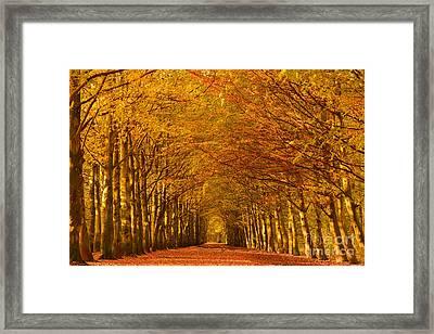 Autumn Lane In An Orange Forest Framed Print