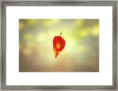 Autumn Leaf Framed Print by Bob Orsillo