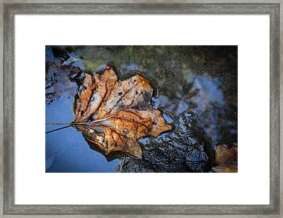 Framed Print featuring the photograph Autumn Leaf by Debra and Dave Vanderlaan