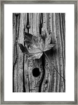 Autumn Leaf On Old Boards Framed Print