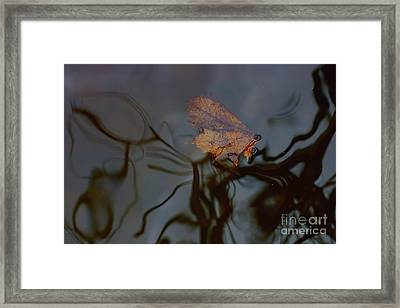 Autumn Leaf On Water. Framed Print
