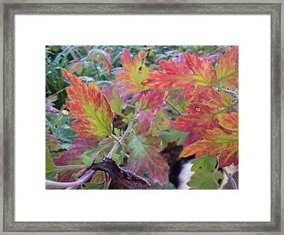 Autumn Leafs Framed Print by David Du Hempsey