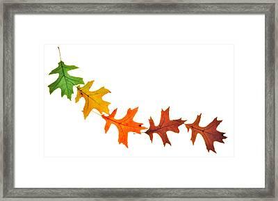 Autumn Leaves 1 Framed Print