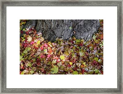 Autumn Leaves 1 Framed Print