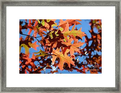 Autumn Leaves 17 Framed Print by Jean Bernard Roussilhe