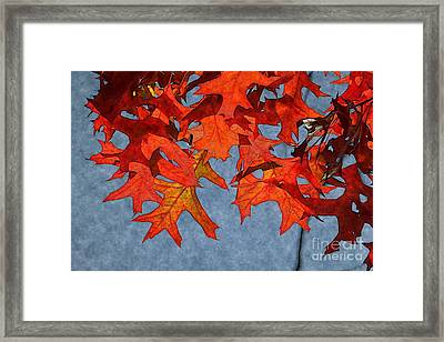 Autumn Leaves 19 Framed Print by Jean Bernard Roussilhe