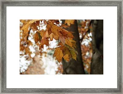Autumn Leaves 2- By Linda Woods Framed Print by Linda Woods