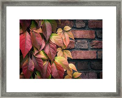 Autumn Leaves Against Brick Wall Framed Print by Julie Palencia