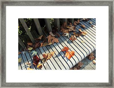 Autumn Leaves Framed Print by Amy Wilkinson