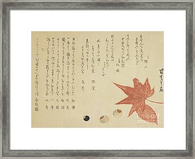 Autumn Leaves And Nuts Framed Print by Ko Sukoku II