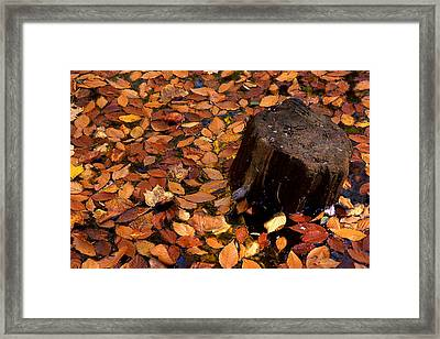 Autumn Leaves And Tree Stump Framed Print by Barry Shaffer