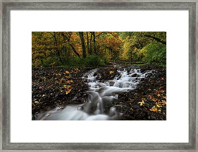 Autumn Leaves And Wahkeena Creek  Framed Print by Jeremiah Leipold