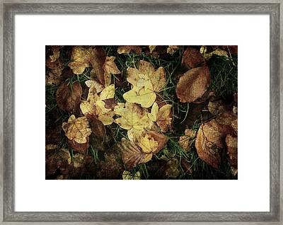 Autumn Leaves Are Falling Down... Framed Print by Vittorio Chiampan