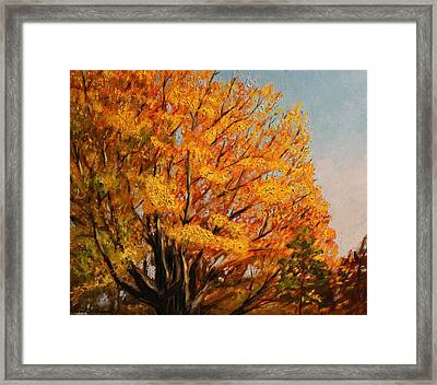 Autumn Leaves At High Cliff Framed Print by Daniel W Green