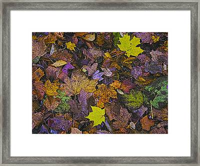 Autumn Leaves At Side Of Road Framed Print