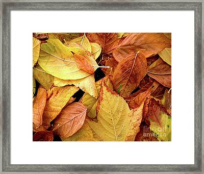Autumn Leaves Framed Print by Carlos Caetano