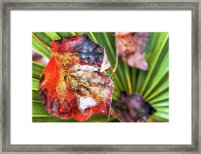 Autumn Leaves Caught In A Palm Tree Framed Print
