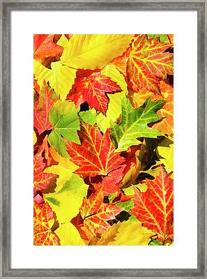 Framed Print featuring the photograph Autumn Leaves by Christina Rollo