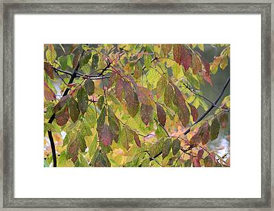 Framed Print featuring the photograph Autumn Leaves by Doris Potter