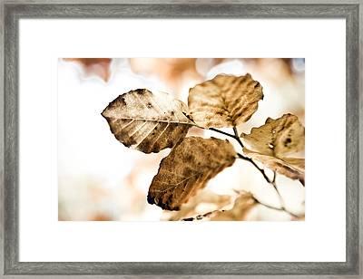 Autumn Leaves Framed Print by Frank Tschakert