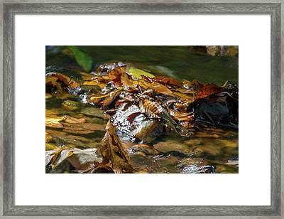 Autumn Leaves In A Creek Framed Print
