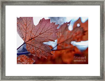 Autumn Leaves In A Forest Framed Print by Sabine Jacobs