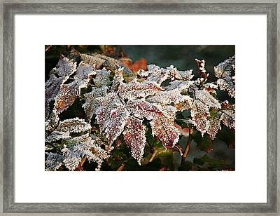 Autumn Leaves In A Frozen Winter World Framed Print by Christine Till