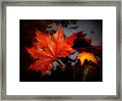 Autumn Leaves In Tumut Framed Print