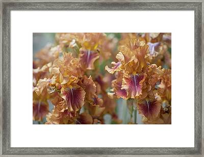 Autumn Leaves Irises In Garden Framed Print