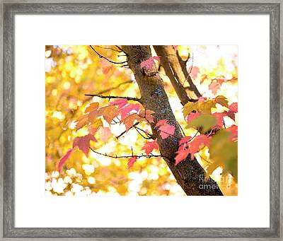 Framed Print featuring the photograph Autumn Leaves by Ivy Ho
