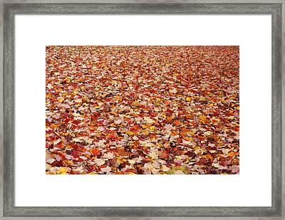 Autumn Leaves Framed Print by Marilyn Wilson