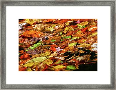 Framed Print featuring the photograph Autumn Leaves by Mitch Cat