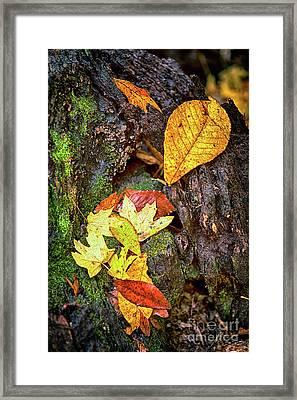 Autumn Leaves On Mossy Tree Trunk Framed Print by Dan Carmichael