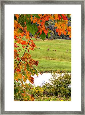 Autumn Leaves On The Farm Framed Print
