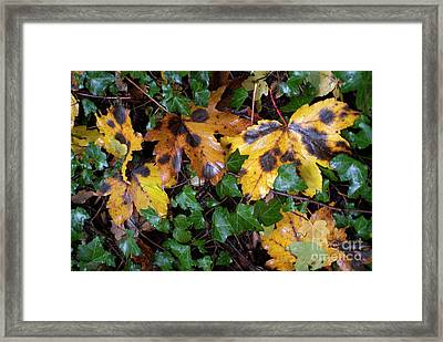 Autumn Leaves On The Ground Framed Print by Sami Sarkis