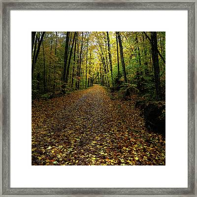 Framed Print featuring the photograph Autumn Leaves On The Trail by David Patterson