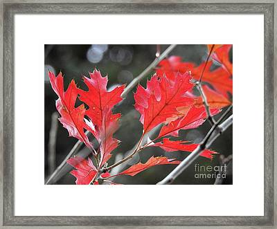 Framed Print featuring the photograph Autumn Leaves by Peggy Hughes