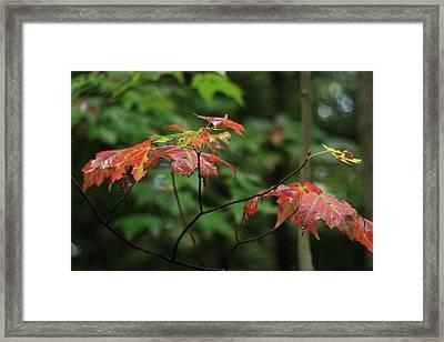 Autumn Leaves In The Rain Framed Print