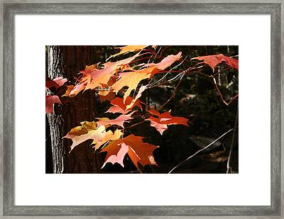 Framed Print featuring the photograph Autumn Leaves by Ron Read