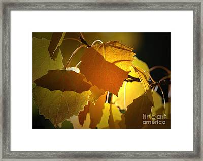 Autumn Leaves Framed Print by Sharon Talson