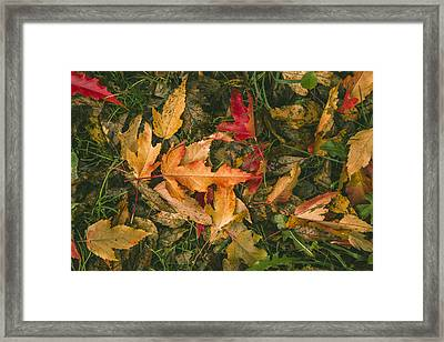 Autumn Leaves Framed Print by Thubakabra