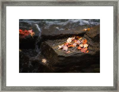 Autumn Leaves Framed Print by Tom Mc Nemar