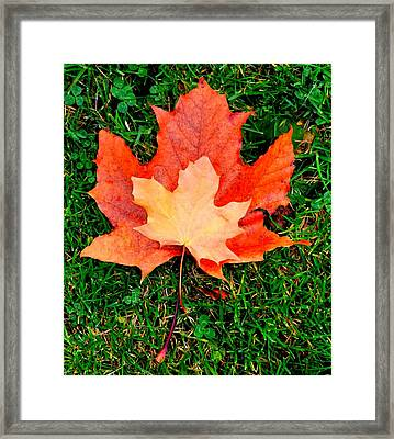 Autumn Leaves Two #2 Framed Print