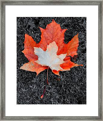 Autumn Leaves Two #3 Framed Print
