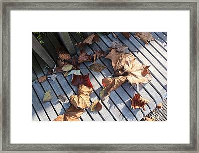 Autumn Leaves Two Framed Print by Amy Wilkinson