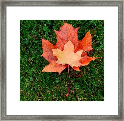 Autumn Leaves Two Framed Print