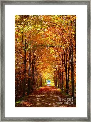 Autumn Light And Leaf Painting Framed Print