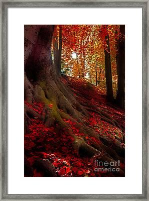Autumn Light Framed Print